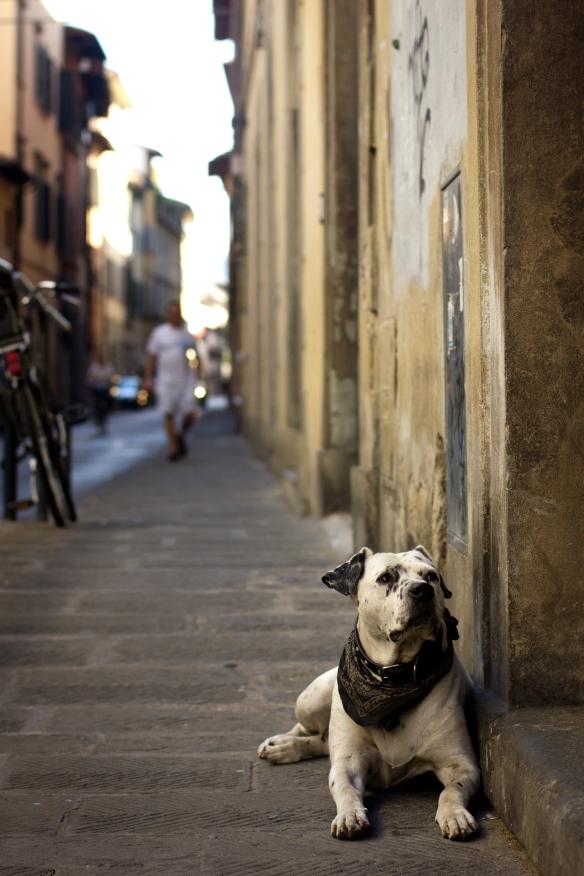 Florentine Dog 3