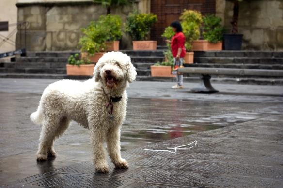 Florentine Dog 1